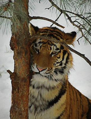 Tiger 2 Da Poster by Ernie Echols