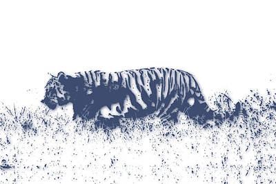 Tiger 4 Poster by Joe Hamilton