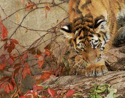 Tiger Cub 3 Poster by Ernie Echols