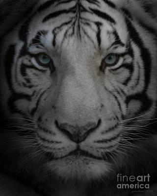 Tiger Eyes Poster by Joseph G Holland