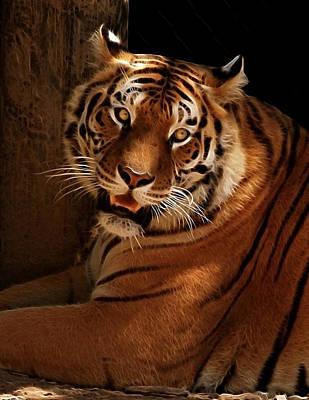 Tiger II Poster by Sandy Keeton