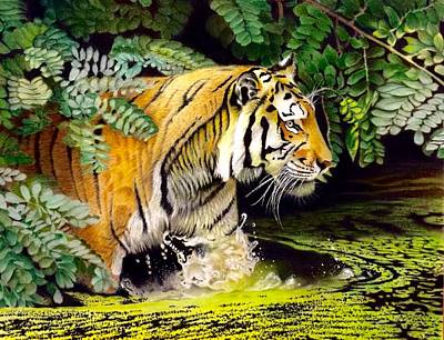 Tiger In The Sunderban Delta Poster