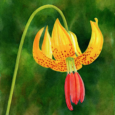 Tiger Lily Blossom With Background Poster