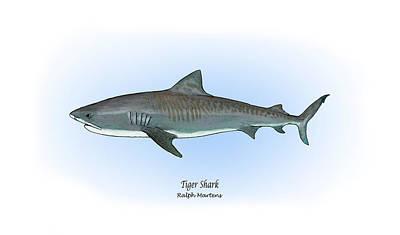 Tiger Shark Poster by Ralph Martens