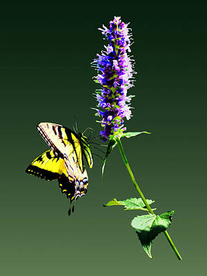 Tiger Swallowtail On Purple Salvia Poster by Susan Savad