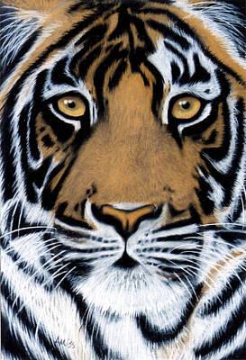 Tiger Tiger Burning Bright Poster by Jan Amiss