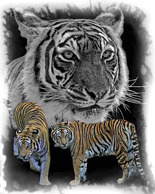 Tiger Tribute Poster by Larry Linton