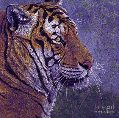 Tiger's Thoughts Poster by Svetlana Ledneva-Schukina