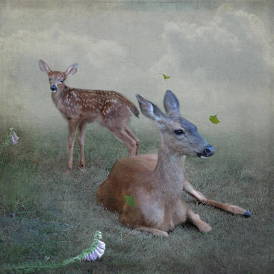 Time Stops For Deer Poster by Sally Banfill
