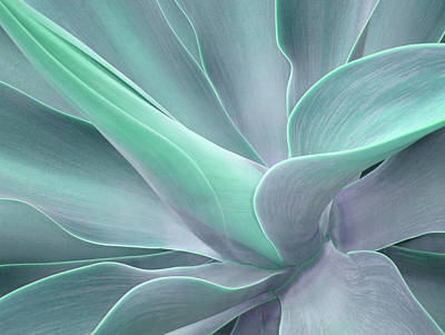 Tinted Agave Attenuata Abstract Poster