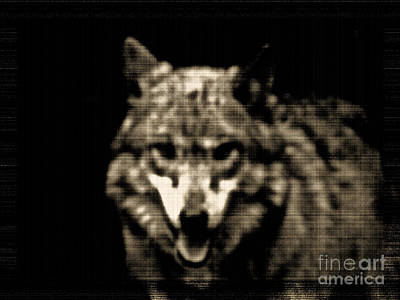 Poster featuring the photograph Tinted Wolf by Debra     Vatalaro