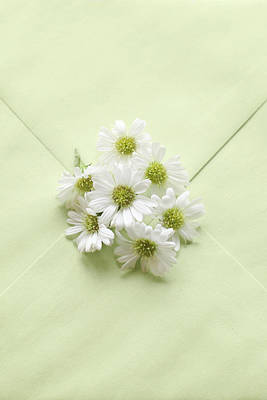 Tiny Daisies On Green Envelope Poster