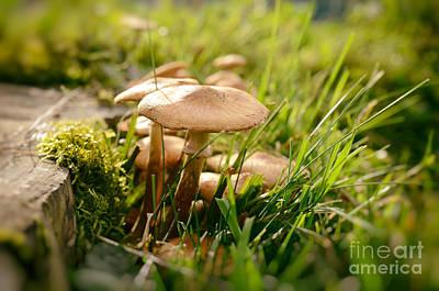 Tiny Mushrooms In Autumn Poster
