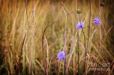 Tiny Purple Flowers In An Autumn Field Poster