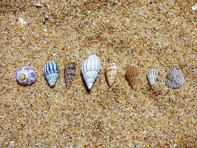 Tiny Seashells On The Sand Poster