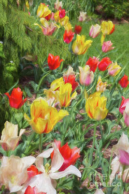 Tiptoe Through The Tulips  Poster by A New Focus Photography