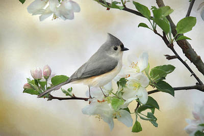 Poster featuring the mixed media Titmouse In Blossoms 1 by Lori Deiter