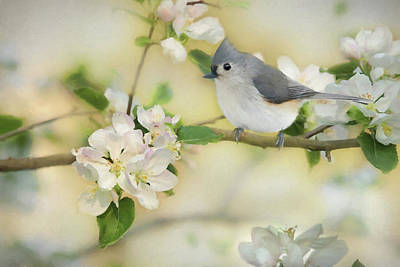 Poster featuring the mixed media Titmouse In Blossoms 2 by Lori Deiter