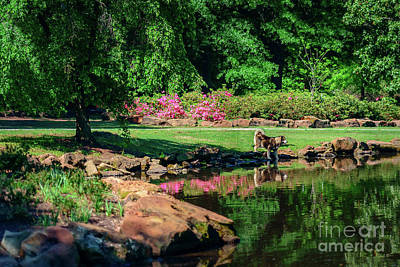 Tking A Break At The Azalea Pond Poster by Tamyra Ayles