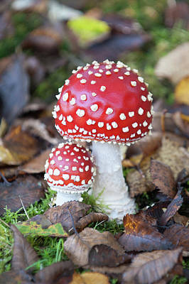 Toadstools In The Woods Vi Poster
