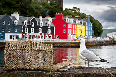 Tobermory Seagull Poster by Jane Rix