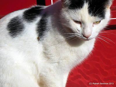 Tom Barn Cat  Poster