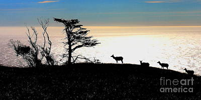 Tomales Bay Tule Elks Poster by Wingsdomain Art and Photography