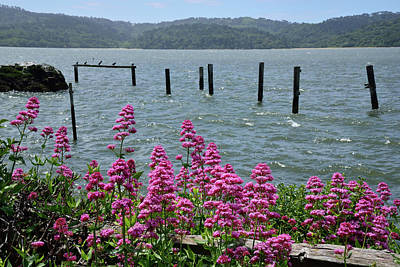 Tomales Bay Wildflowers  Poster