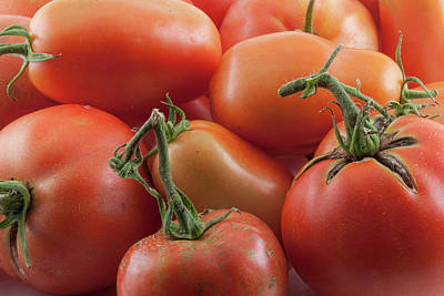 Poster featuring the photograph Tomato Stems by James BO Insogna