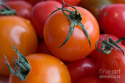 Tomatoes  Poster by A New Focus Photography