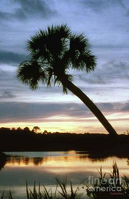 Poster featuring the photograph Tomoka River Sunset by Dodie Ulery