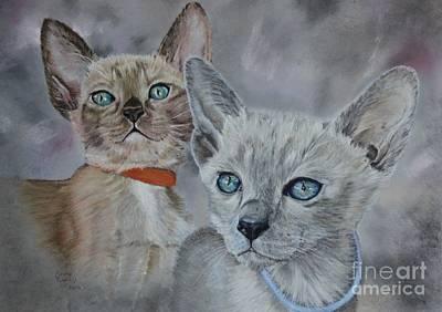 Tonkinese Kittens Poster