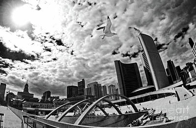 Toronto City Hall Square With Gull Poster by Charline Xia