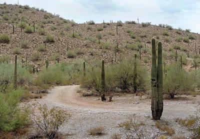Tortured Cactus Poster