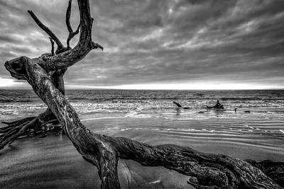 Treasures By The Sea Black And White Poster by Debra and Dave Vanderlaan