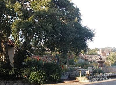 Tree At Mission Carmel Poster