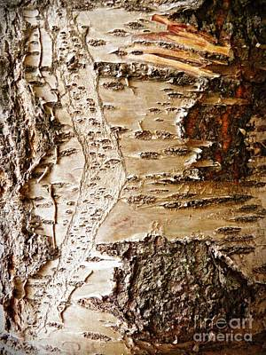 Tree Bark 8 Poster by Sarah Loft