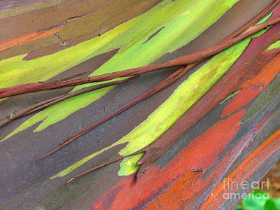 Tree Bark Abstract Poster by Ron Dahlquist - Printscapes