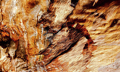 Tree Bark Series  - Patterns #2 Poster by Lexa Harpell