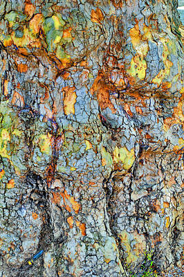 Tree Bark. Textures. Poster by Andy Za
