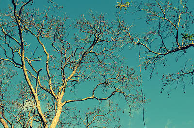 Tree Branches Reaching For Heaven Poster by Patricia Awapara