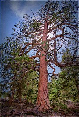 Tree Cali Poster