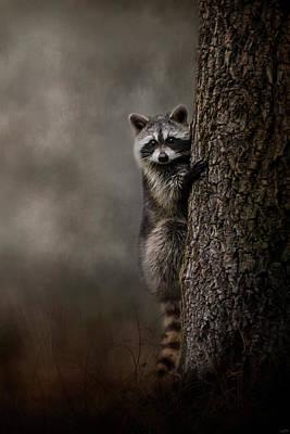 Tree Hugger Raccoon Art Poster