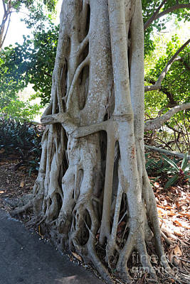 Tree Huggers Poster