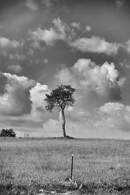Poster featuring the photograph Tree In A Field by Guy Whiteley
