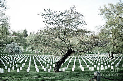 Tree In Arlington Cemetery  Poster