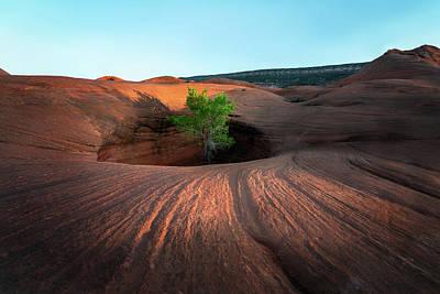 Tree In Desert Pothole Poster
