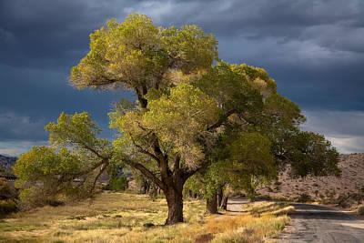Tree In Nevada Poster by Gunter Nezhoda
