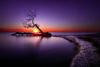 Tree In The Lake - Henderson, Ny. Lake Ontario Southwick Beach Sunset Sunrise Poster