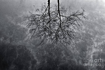 Tree In Water Poster